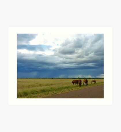 Horses roaming the Queensland Outback Art Print
