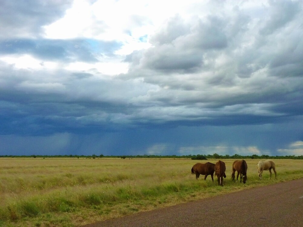 Horses roaming the Queensland Outback by Sue Downey