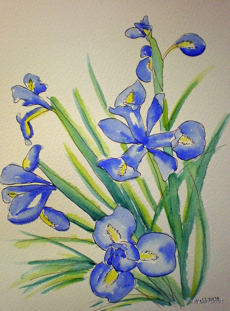 Blue Iris by Gerda  Smit