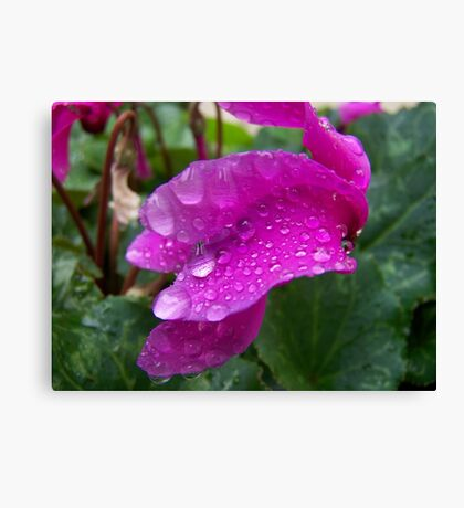 Drips of rain Canvas Print