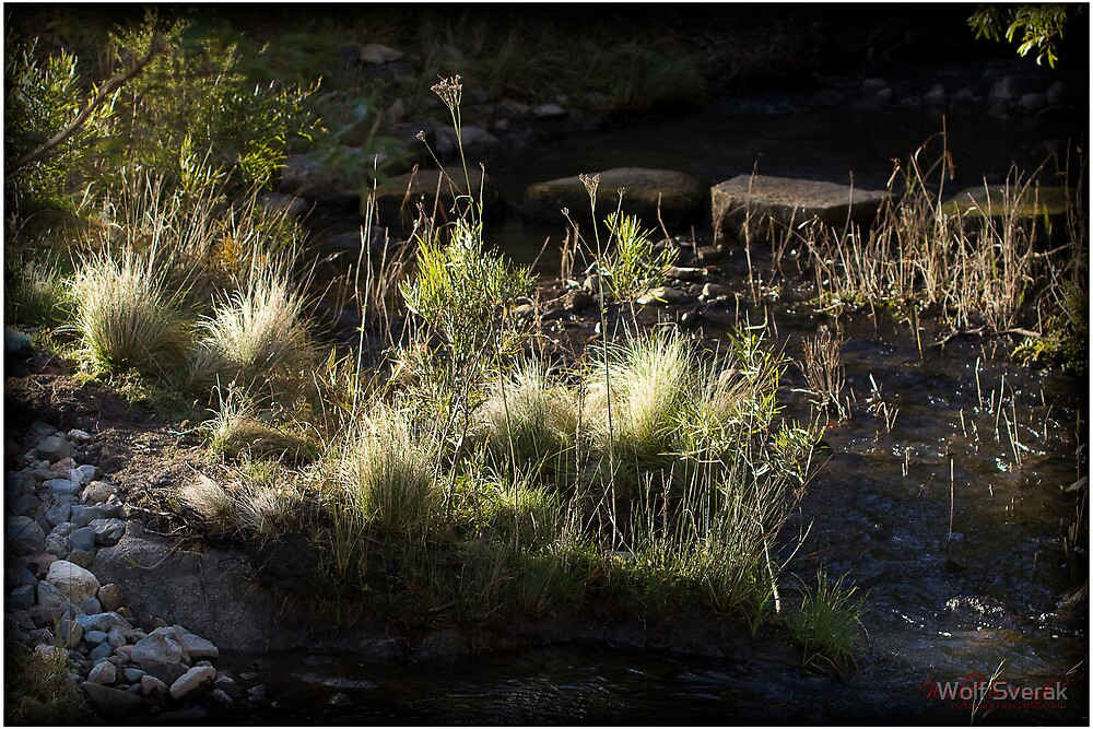 Tidbinbilla Nature Reserve - The Sanctuary by Wolf Sverak