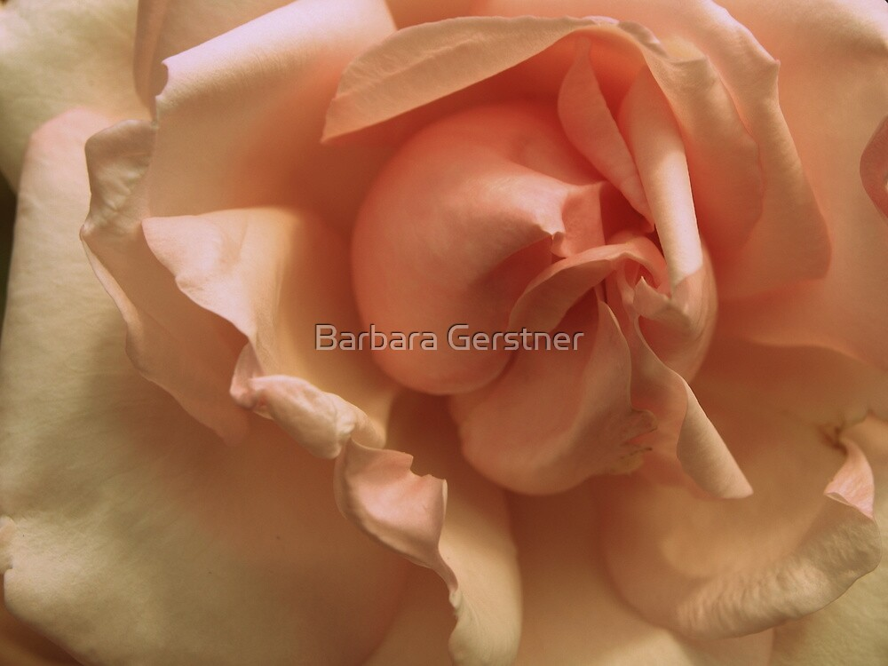 Perfect Pink Petals by Barbara Gerstner