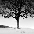 Snow and Tree, Southern Upland Way, Yair, Scottish Borders by Iain MacLean