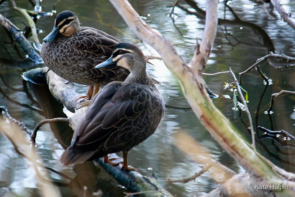 2 Little Ducks by Kate Halpin