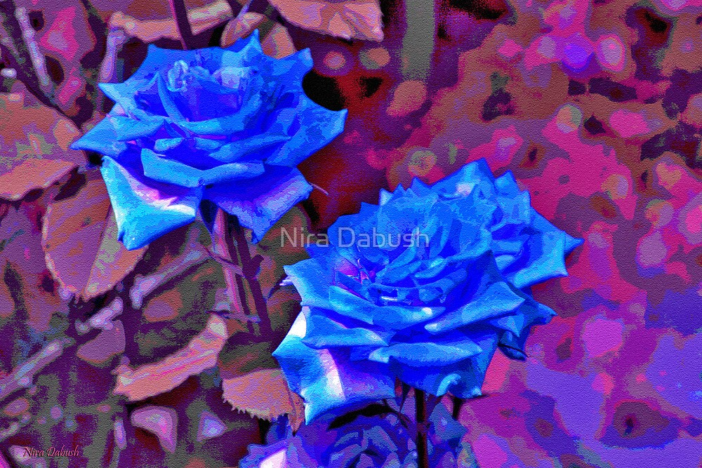 Roses of the Sand by Nira Dabush