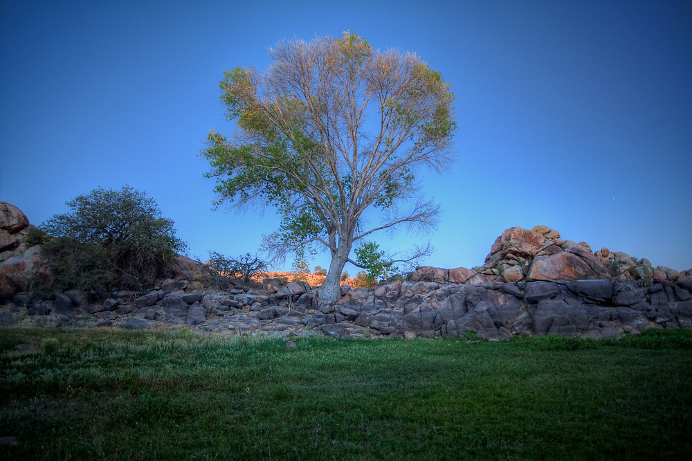 Rock Wall Tree Re...What The? by Bob Larson