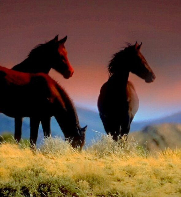 FEARLESS AND FREE THESE WILD HORSES ARE THE LUCKY ONES THEY BELONG TO NO ONE by Jeanne  Nations