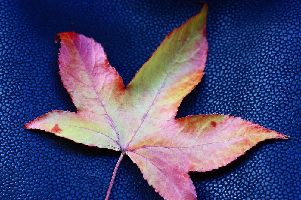 Autumn hues by Stephen Denham