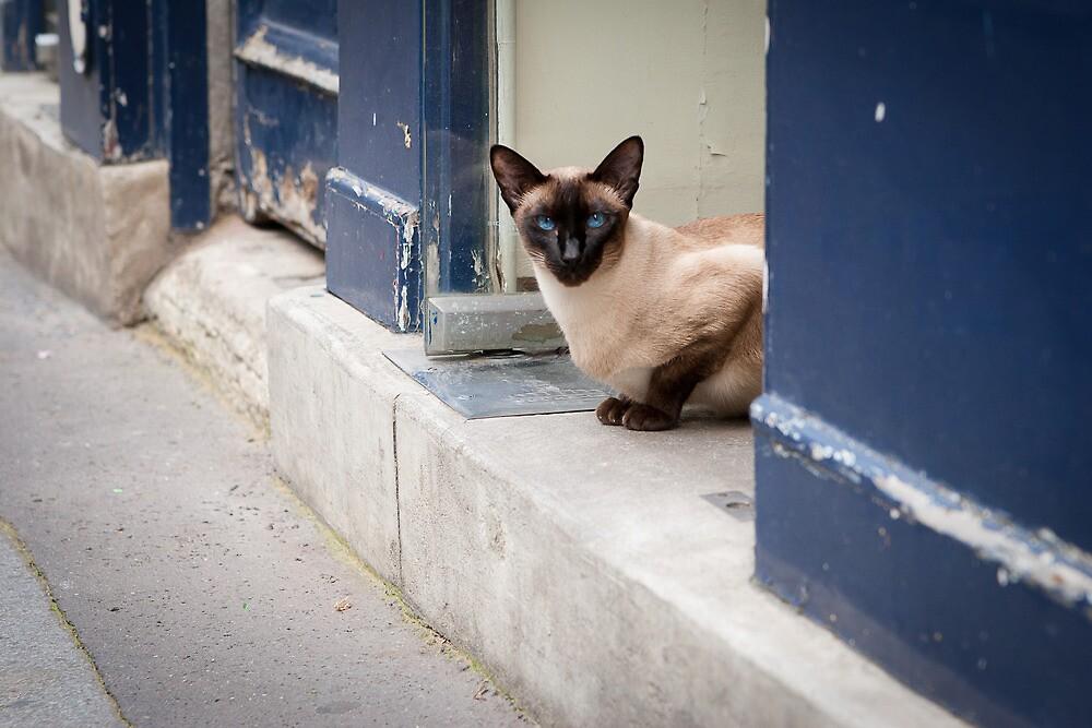 A Cat in Paris by Joe Rivera