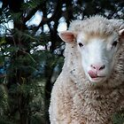 Beware the wolf in sheep's clothing! von Maree Cardinale