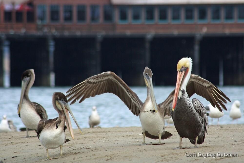 A Pelican Hug by Corri Gryting Gutzman