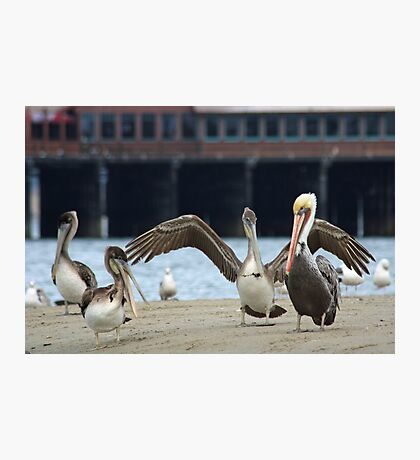 A Pelican Hug Photographic Print