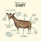 Anatomy of a Goat by Sophie Corrigan