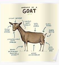 Anatomy of a Goat Poster