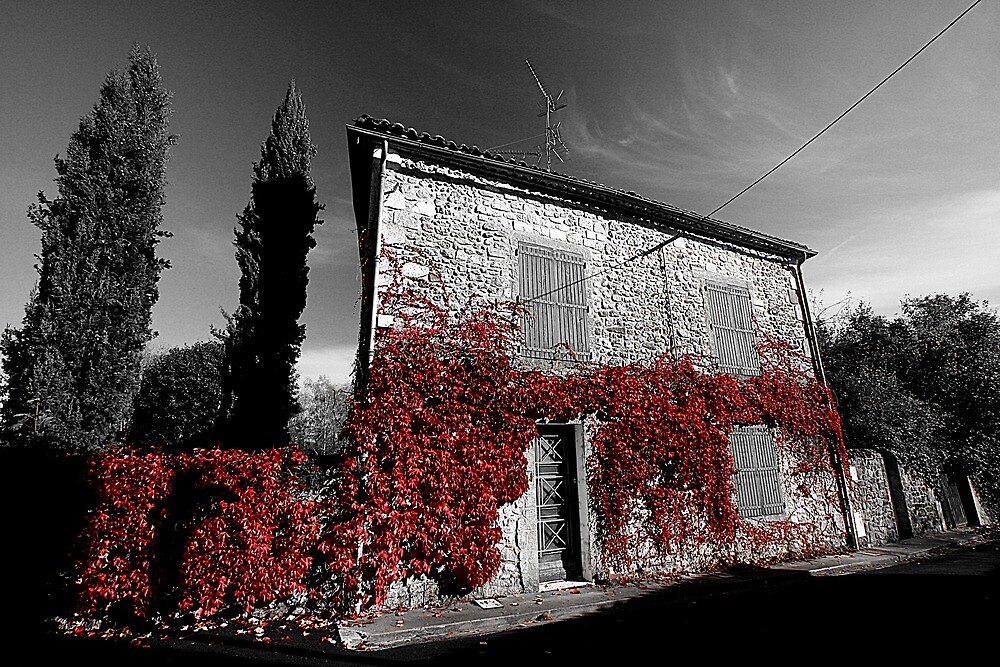 Red leaf coated house by Laurence Norah