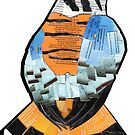American Kestrel, falco sparverius by Ruud van Koningsbrugge