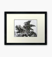 Heavy Spring Snowstorm Framed Print