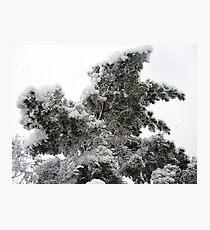 Heavy Spring Snowstorm Photographic Print