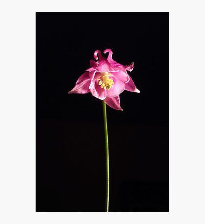 Wild One Photographic Print