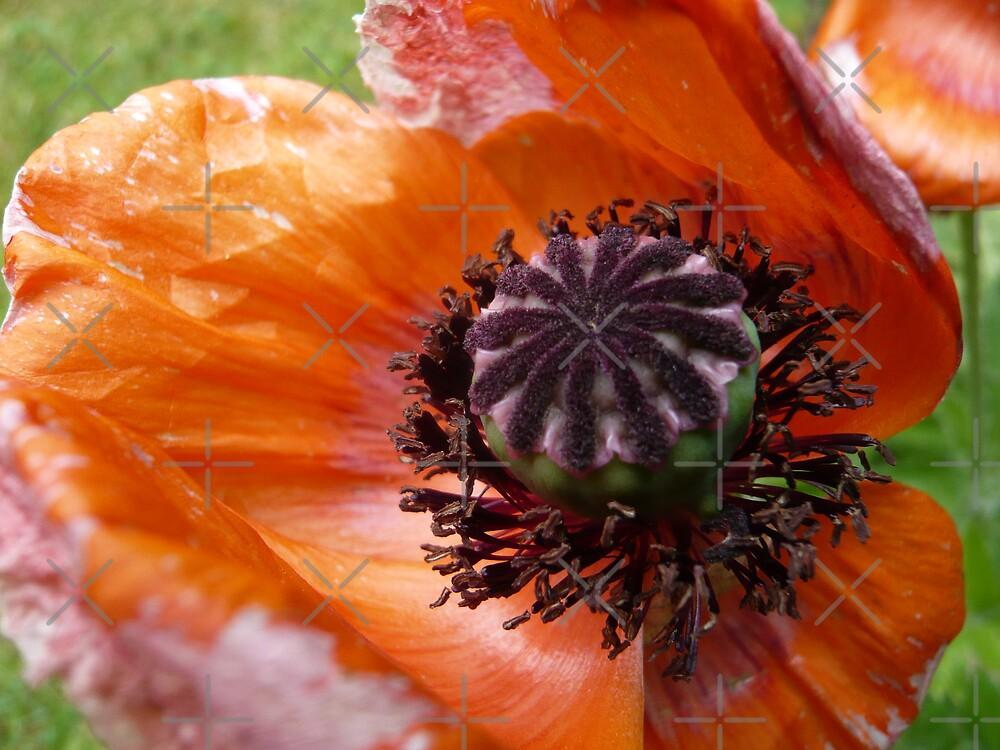 Orange to the end by Hekla Hekla