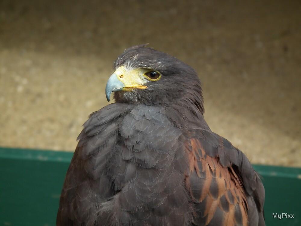 Feathers by MyPixx