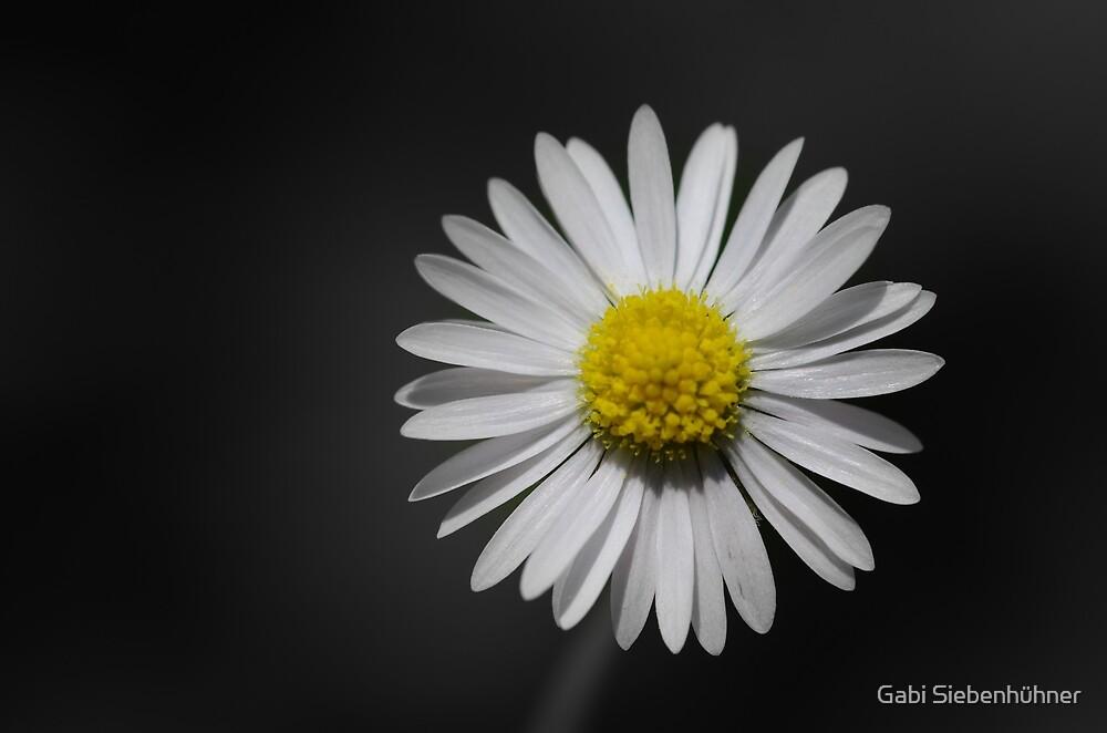 Daisy by Gabi Siebenhühner