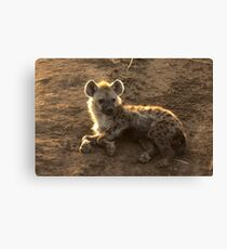 Young Spotted Hyena Canvas Print