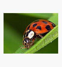 Ladybird - Ladybug - Marienkäfer - Glückskäfer Photographic Print