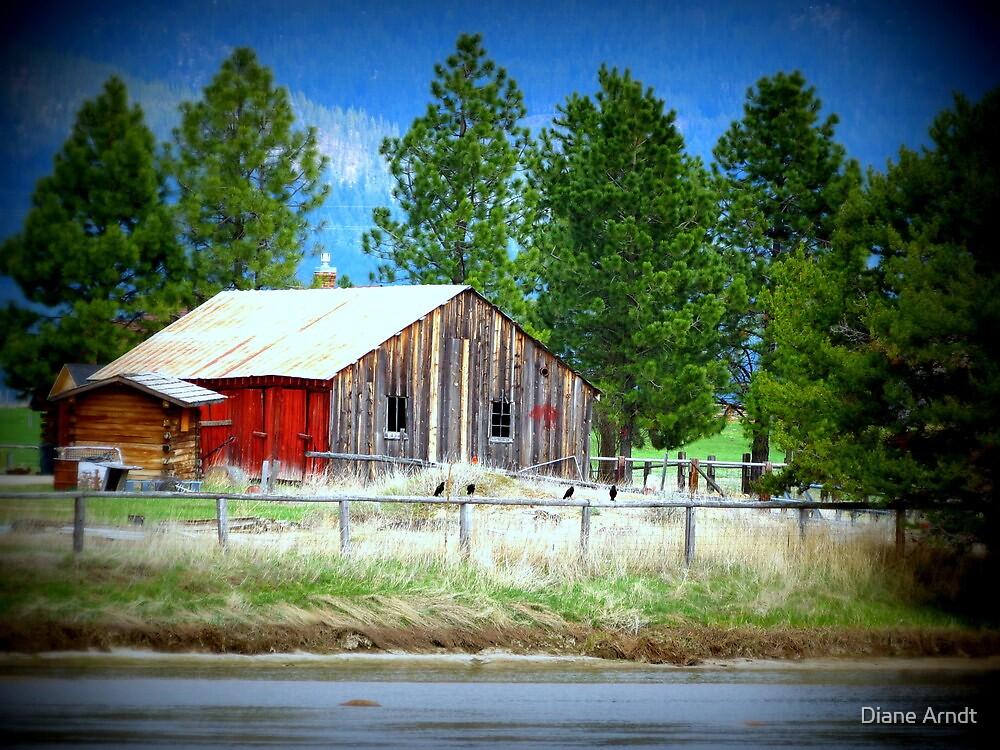 Barn....Cascade, Idaho by Diane Arndt