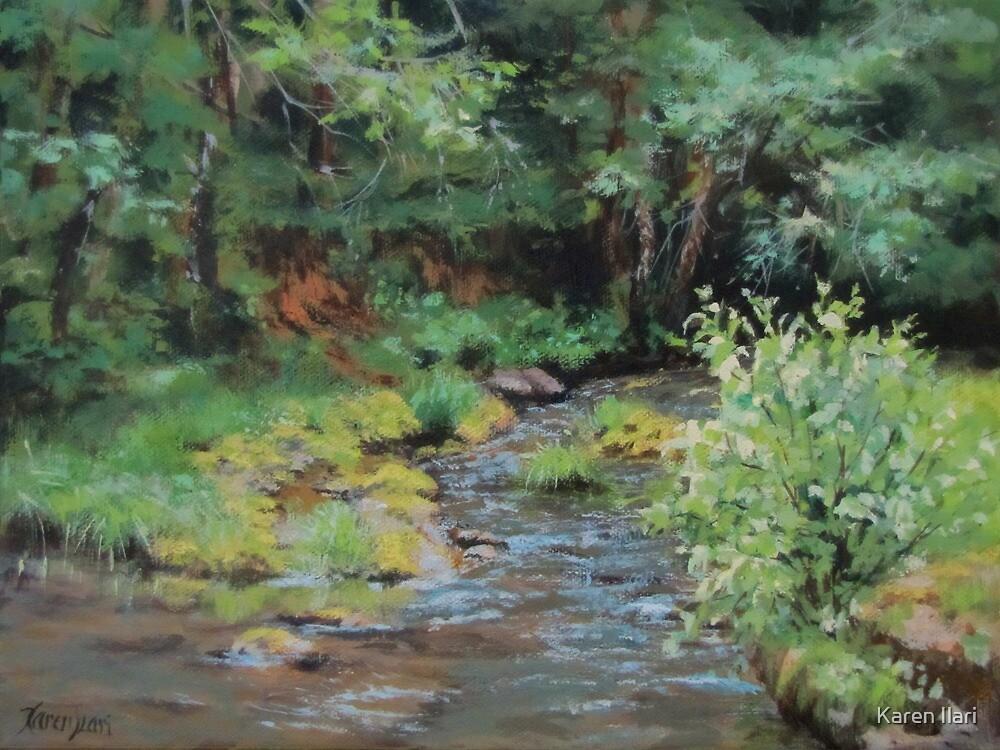 Shady Creek by Karen Ilari