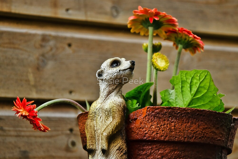 Watching The Flowers Grow :) by Susie Peek