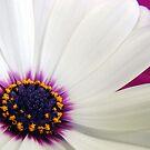 Osteospermom Beauty by PatChristensen
