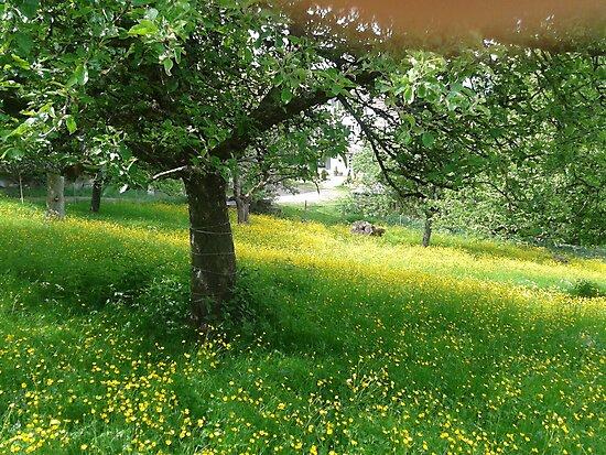 grassland by fladelita