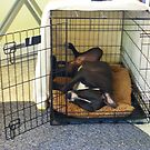 I luv my crate! by Marlene Piccolin
