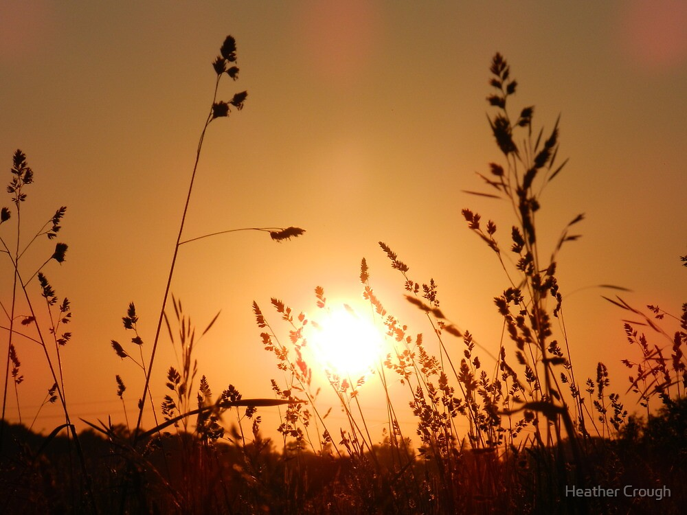 In the golden light by Heather Crough