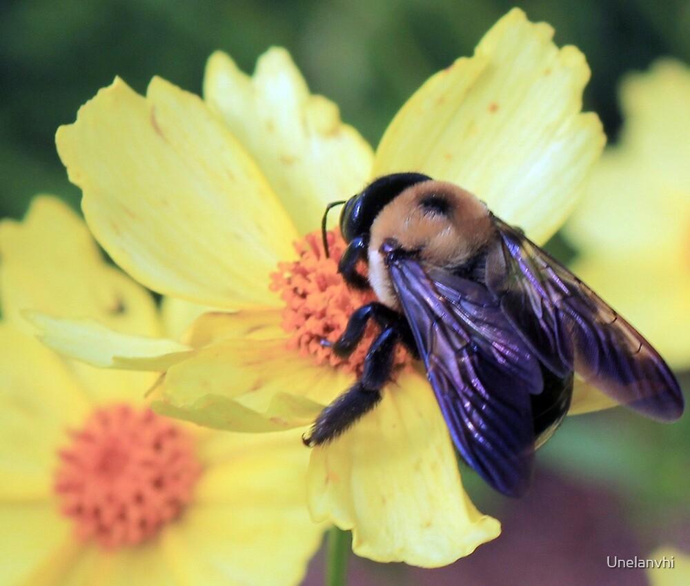 Bumble Bee  by Unelanvhi