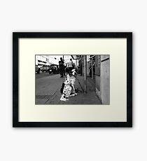 Dirty Water Dog Framed Print