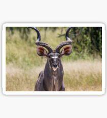 Kudu Sticker