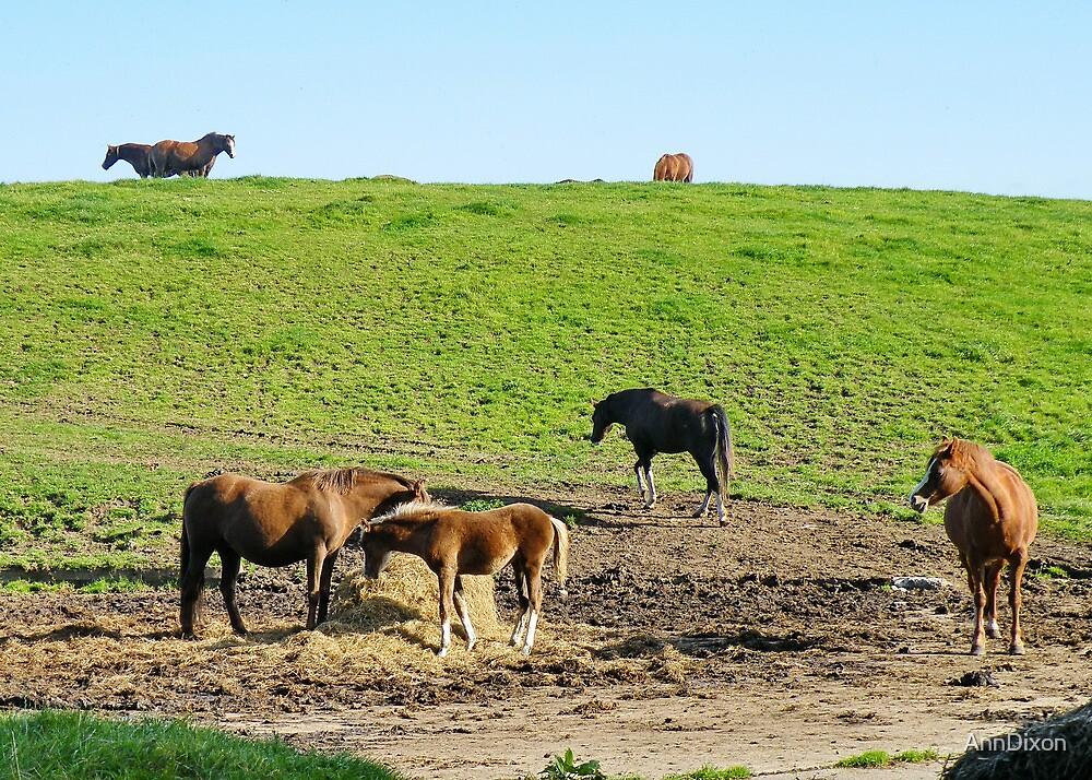 Horses Galore by AnnDixon