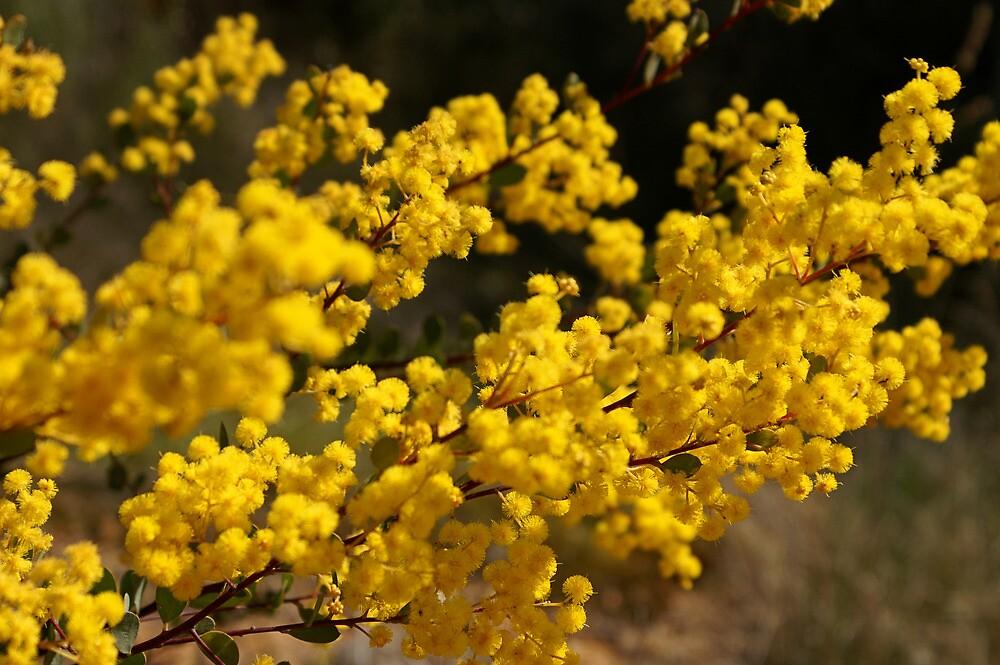 Wattle Gold by wallflowerarts