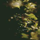 lights  by Dal Kumar  Pun