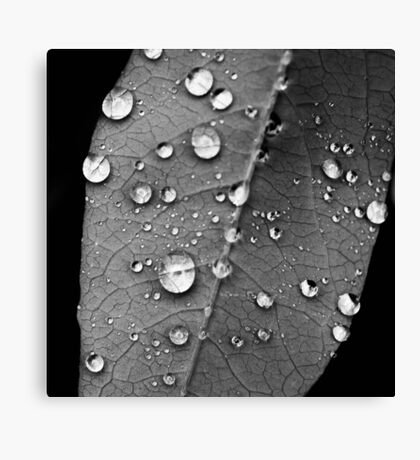 Water droplets on a leaf study 1 Canvas Print