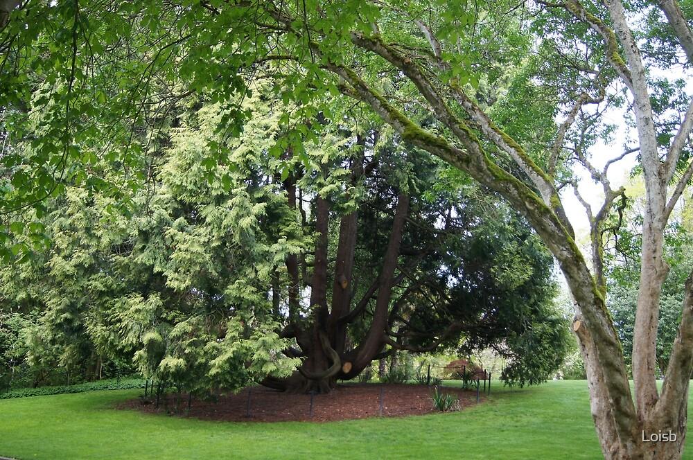 Carl S. English Jr. Garden by Loisb