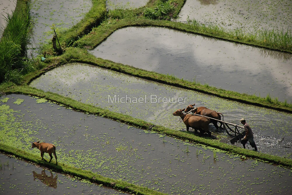 Farmer ploughing with oxen by Michael Brewer