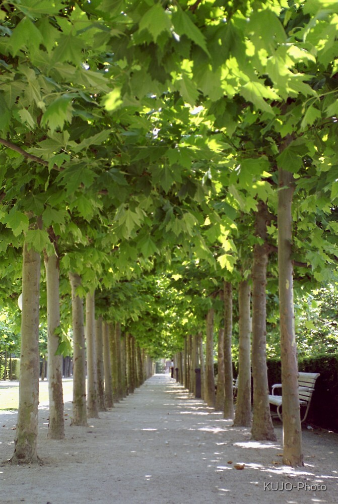 Avenue of Trees, Brussels by KUJO-Photo