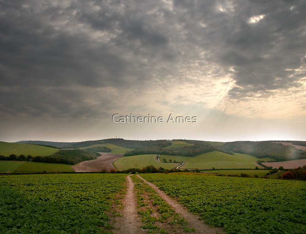 Country road on the South Downs Way near Amberley, UK by Catherine Ames