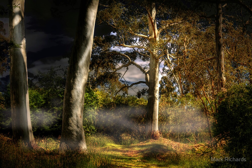 Ghost Gums by Moonlight - Hahndorf, The Adelaide Hills, SA by Mark Richards