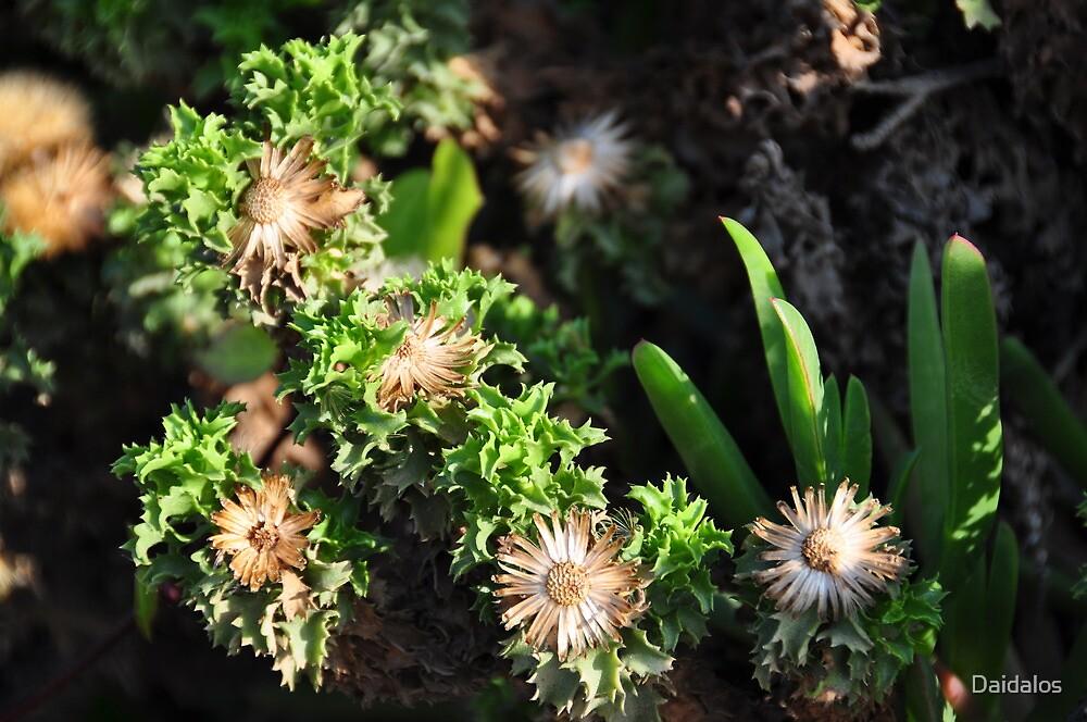 Flora at chilean sea coast by Daidalos