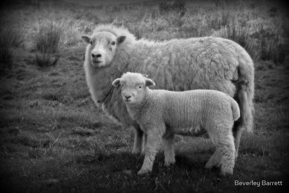 Dartmoor Duo  by Beverley Barrett