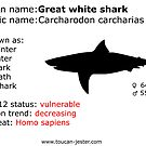 Great white shark by toucanjester